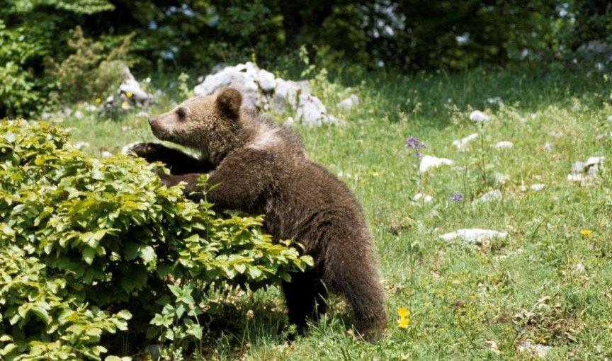 Nuovo stop alla caccia nel versante laziale della Zona di Protezione Esterna del Parco Nazionale d'Abruzzo, Lazio e Molise