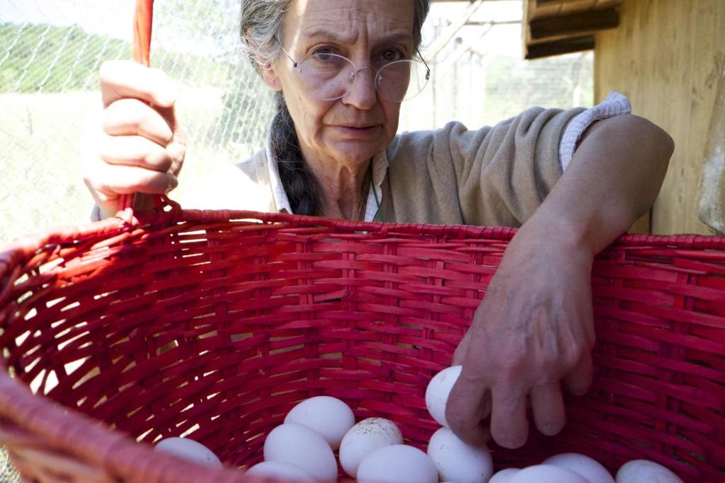 Massa D'Albe: canapa alle galline per ottenere uova più ricche di omega 3