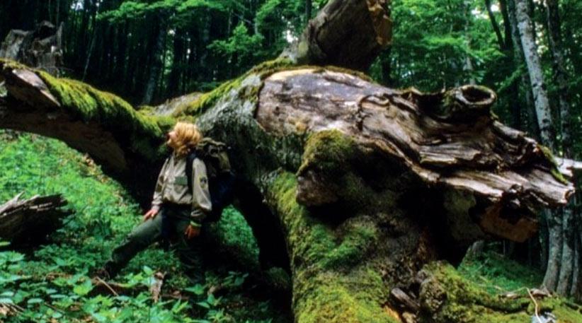 Villavallelonga, le foreste vetuste della Valle Cervara patrimonio dell'UNESCO
