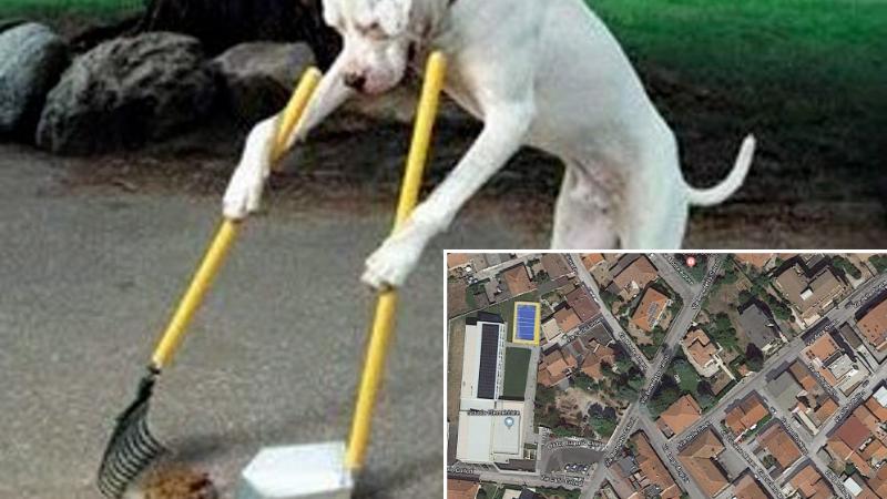 Deiezioni canine sui marciapiedi, slalom per i genitori dell'Agostino Persia di Avezzano per evitarle