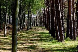 Il bosco si riprende quello che l'uomo nel passato gli ha tolto