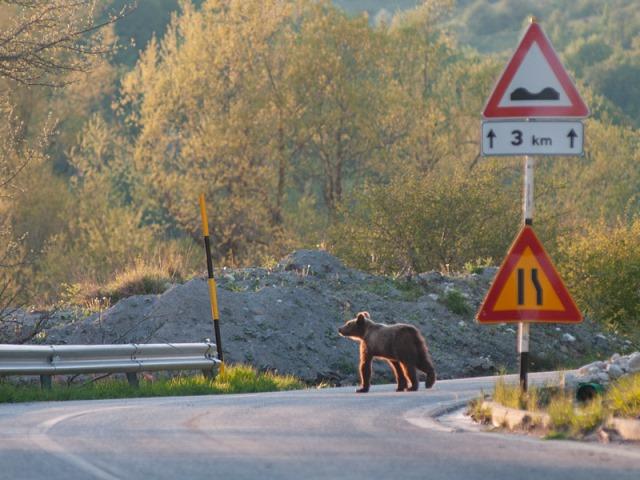 """Progetto Life """"Safe Crossing"""" La prevenzione degli incidenti stradali con la fauna protetta"""