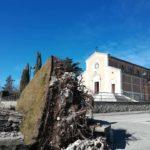 Il pino di Massa d'Albe abbattuto dal vento poteva essere salvato? Parla l'esperto Giovanni Morelli