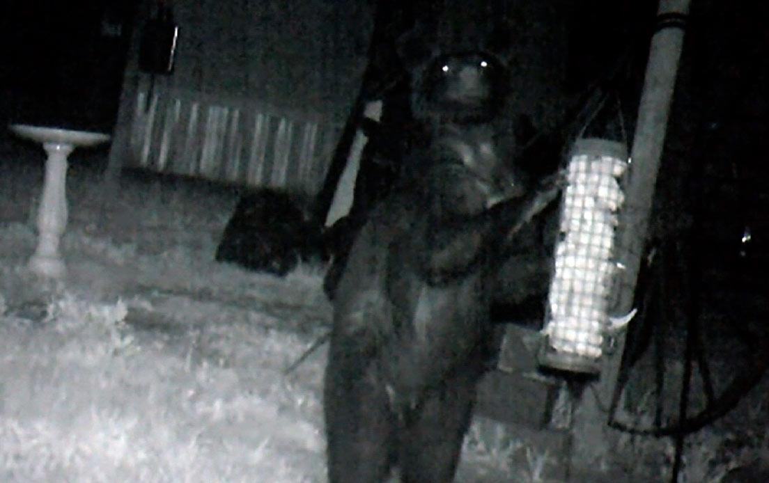 """L'orso alle porte di casa, paura per una donna con la bambina, """"dritto sulle zampe posteriori stava cercando di sfondare una porta di ferro, era enorme!"""