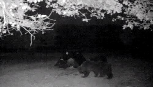 L'orso luchese torna a fare visita al cane Jack e... prende casa