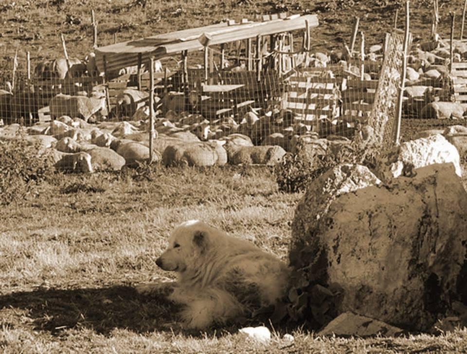 """""""Pane murato"""" antico pasto dei pastori di Trasacco"""