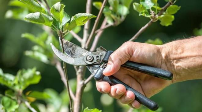 Tecnica colturale dei fruttiferi, al via un corso all'insegna della sostenibilità Avezzano
