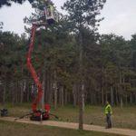 Nidi della processionaria nella pineta di Avezzano, iniziati i lavori per la rimozione