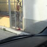 Macabra scoperta: trovato un gatto morto infilzato in un cancello