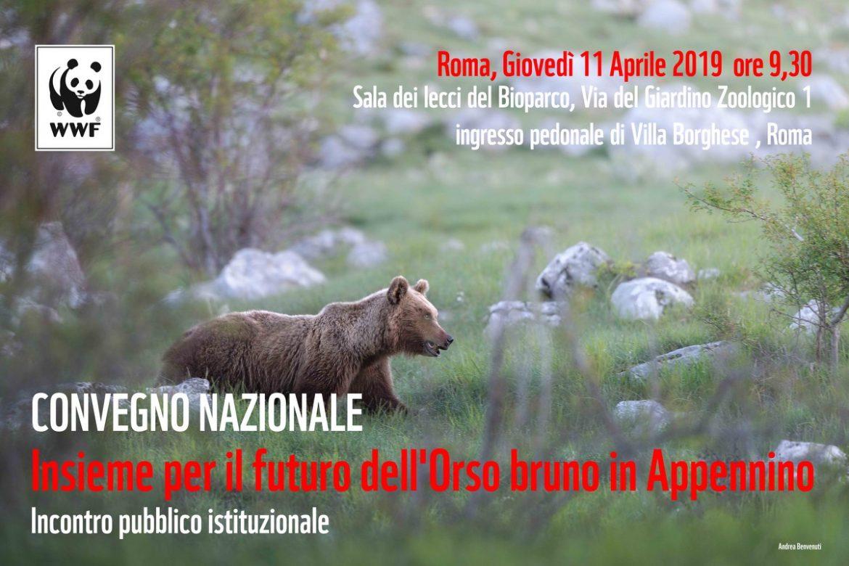 """""""Insieme per il futuro dell'orso marsicano in Appennino"""" un convegno organizzato dal WWF"""