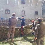 Atto di intimidazione nei confronti del Parco: trovano una testa di agnello scuoiata sulla recinzione