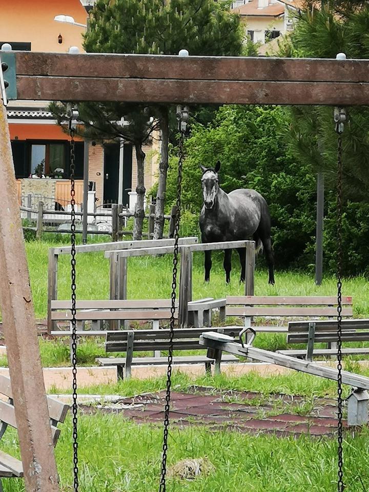 Cavallo smarrito si aggira a Tagliacozzo per le strade di Coragrossa, appello dei residenti