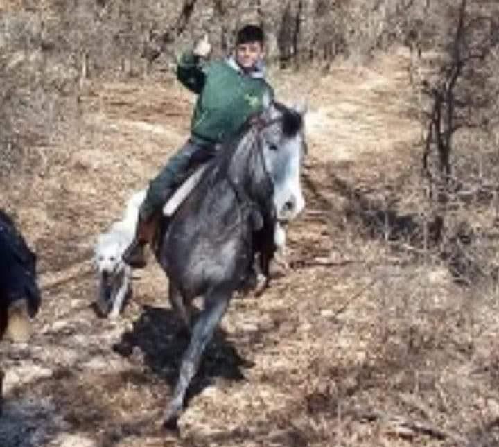 Cavalla muore fulminata e salva il giovane fantino di 10 anni