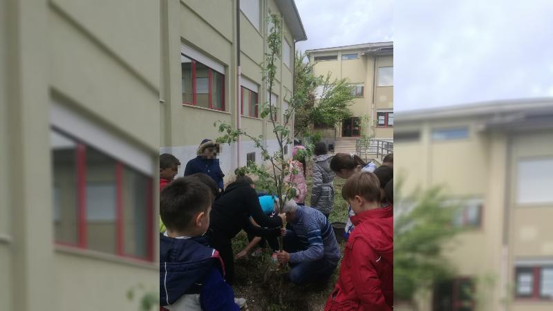 """Festa dell'albero 2019: """"piantiamo un albero per piantare una speranza"""""""