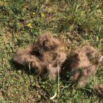 Trovati dei resti di un cucciolo di orso a Pescasseroli