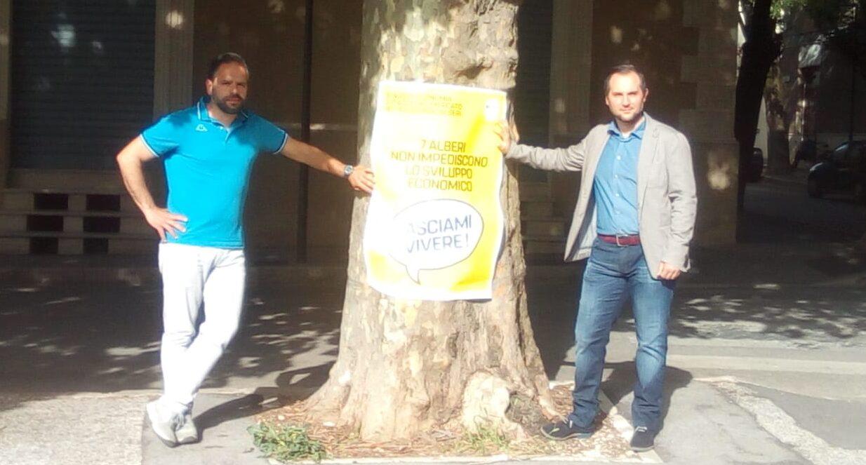"""M5S """"Verso la salvezza gli alberi di piazza Mercato. Il M5S ottine dal comune la salvaguardia delle sette piante"""