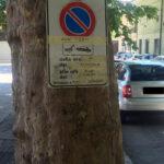 """Addio agli storici alberi di Piazza del Mercato, così partono i lavori di restyling , Verdecchia e Di Berardino, """"scempio dell'amministrazione De Angelis"""""""