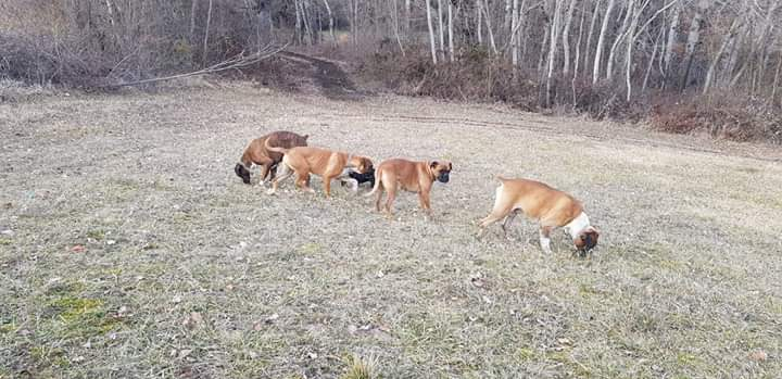 Avezzano, smarriti 4 cani in zona Borgo Pineta