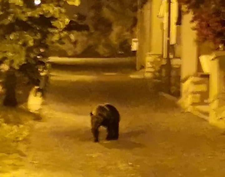 L'orsa Amarena a passeggio per Bisegna