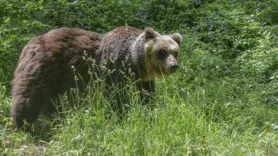 """Sabato 26 Ottobre Escursione """"Sulle tracce dell'Orso"""""""