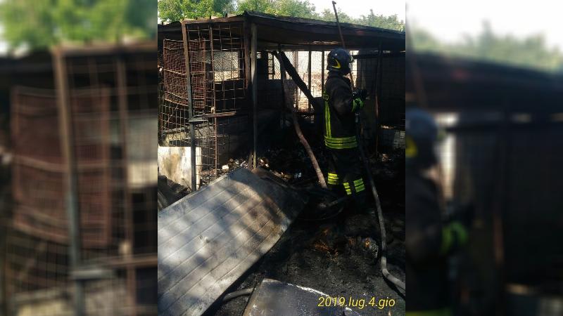 Un incendio di sterpaglie raggiunge un canile e uccide quattro cani