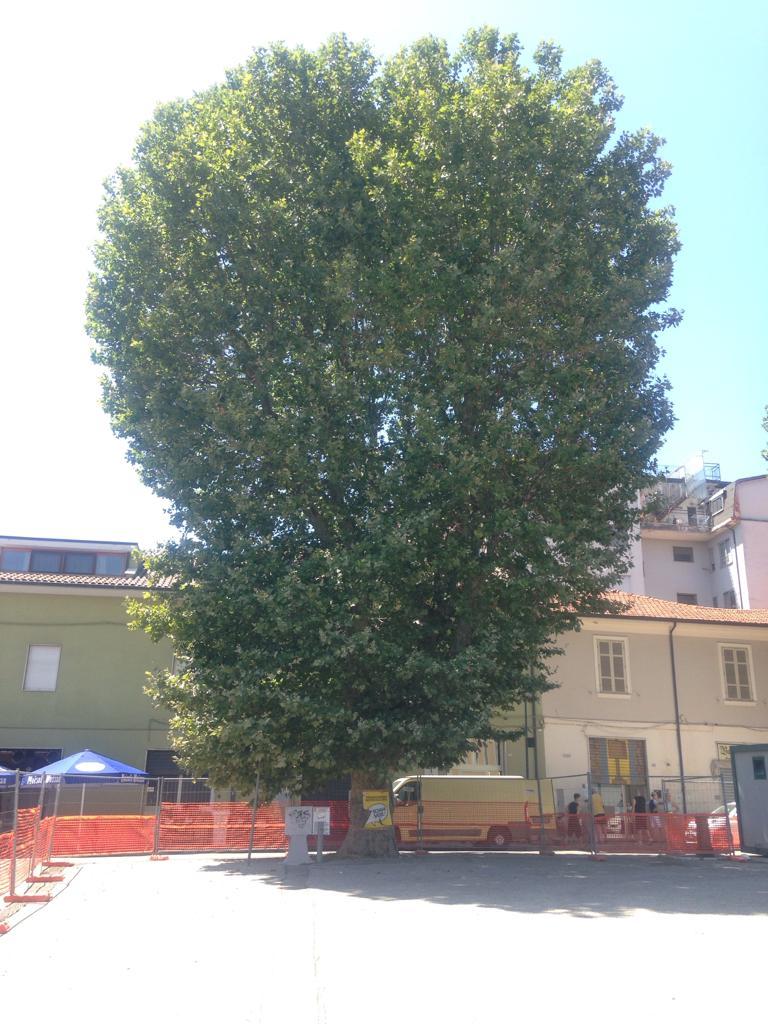 """Piazza Mercato Avezzano, Co.n.al.pa. Abruzzo scrive a chi di dovere, """"la legge tutela gli alberi di piazza mercato come pregio storico culturale e religioso"""""""