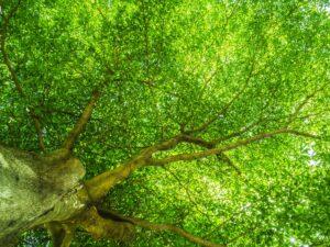 Ecco perché piantare alberi è molto più intelligente e vantaggioso che abbatterli