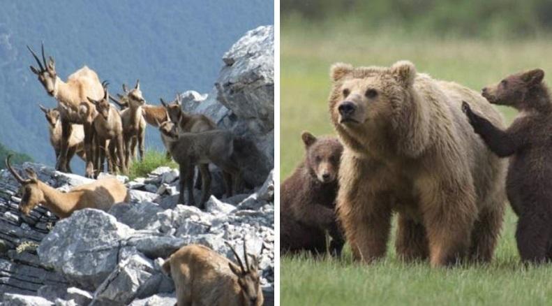 Prima dell'orso e del camoscio: predadori e prede di 10 milioni di anni fa