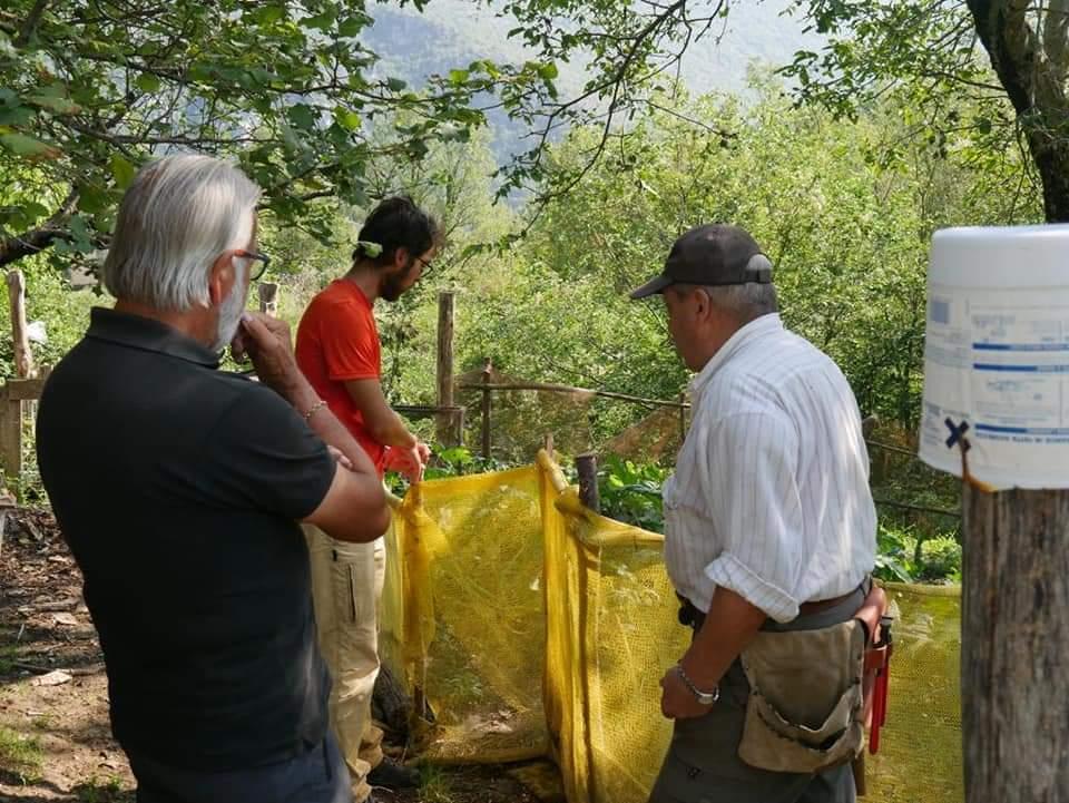Realizzato a Capistrello recinto elettrificato per la prevenzione dei conflitti tra Orso Marsicano e allevamenti