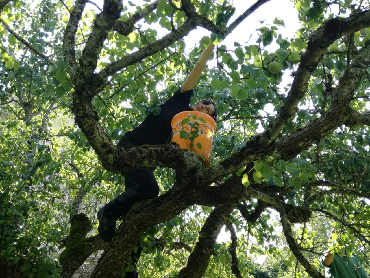 Raccogliere la frutta per tutelare l'orso marsicano