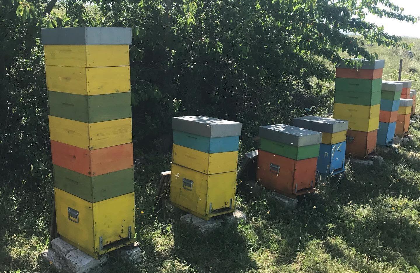 """Per l'azienda apistica di Pescina Dolce Lavanda """"Gocce D'Oro"""" al concorso Grandi Mieli D'Italia"""