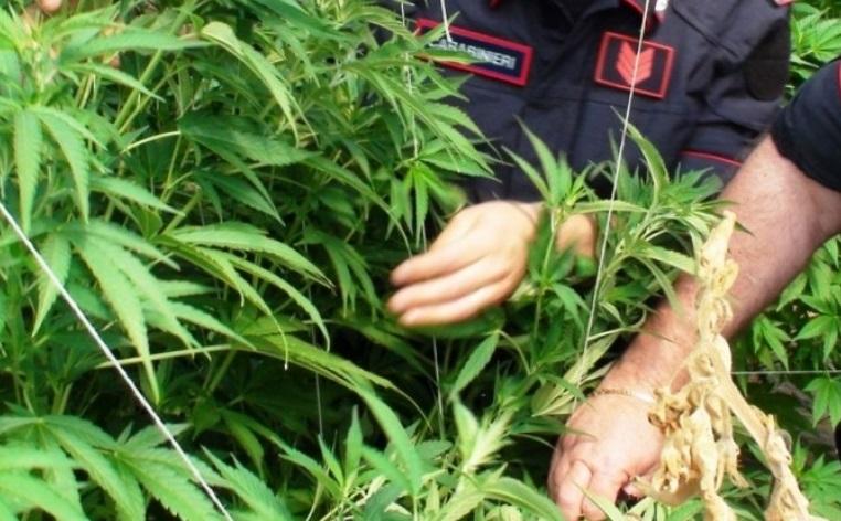Coltivazione di marijuana nel Fucino, in dodici rinviati a giudizio. Ucciso uno degli imputati