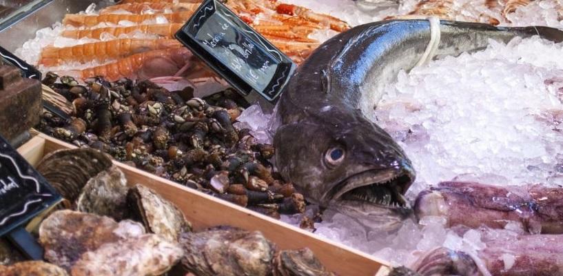 """Coldiretti """"Fine del fermo biologico, il pesce fresco dell'Adriatico torna in tavola"""""""