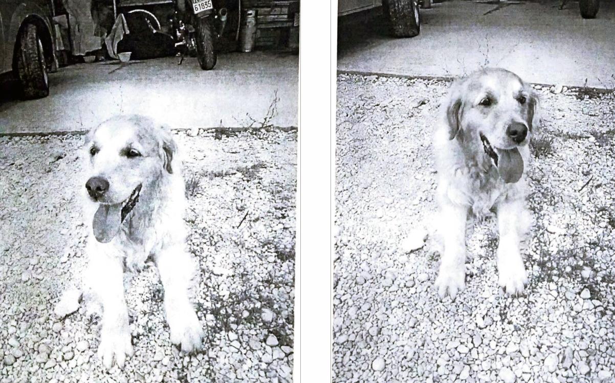 Famiglia chiede aiuto per la ricerca di una cagnolina ad Avezzano