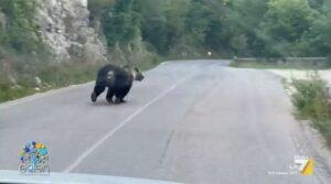 Licia Colò porta le telecamere di La7 nel Parco Nazionale d'Abruzzo