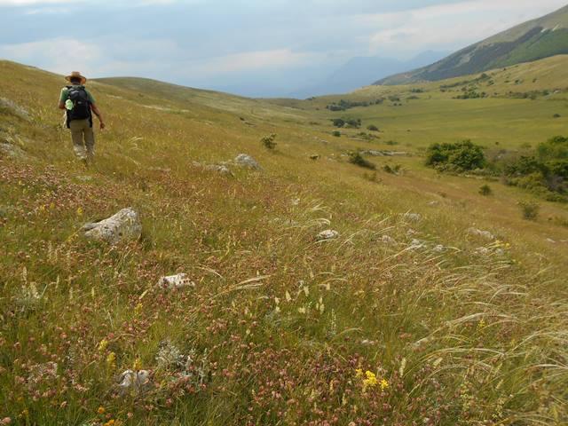 Una specie relitta dalle steppe dell'epoca glaciale ritrovata nella nella Valle del Giovenco