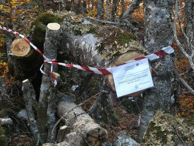 Tagliava legna senza autorizzazione all'interno del PNALM, i guardaparco lo denunciano e gli sequestrano la motosega e la legna