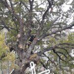 Vigili del Fuoco di Carsoli e Comune in azione per la sicurezza della Tiburtina