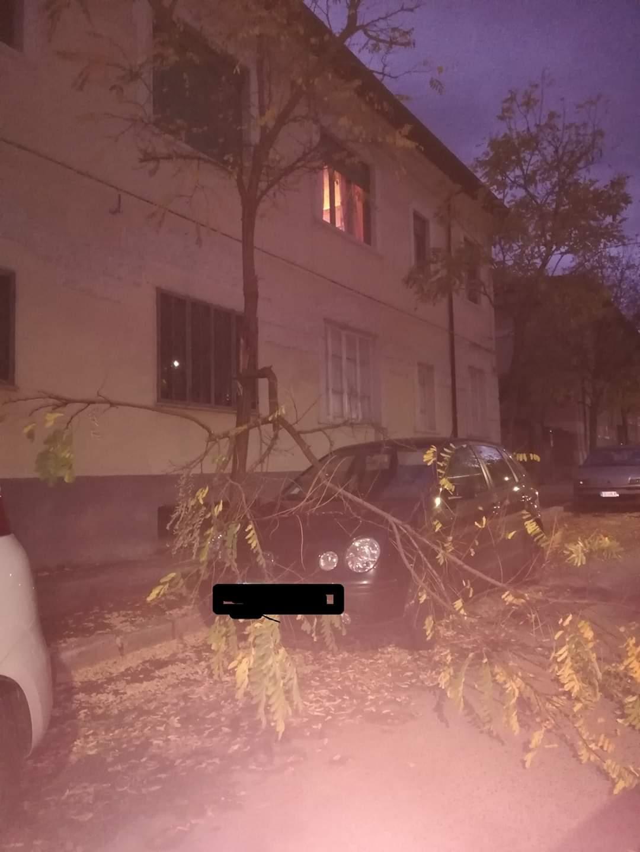 Avezzano, cade un ramo su una macchina in centro