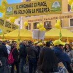 """Cinghiali in Abruzzo, 400 incidenti l'anno. Coldiretti """"E' emergenza"""""""