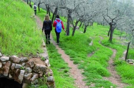 Al via la camminatalungo il percorso delle Strade dell'Olio