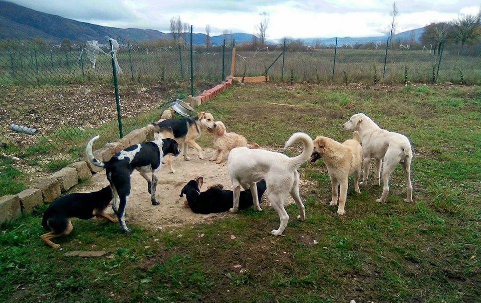 A Trasacco continua l'impegno per dare una casa sicura ai cani randagi
