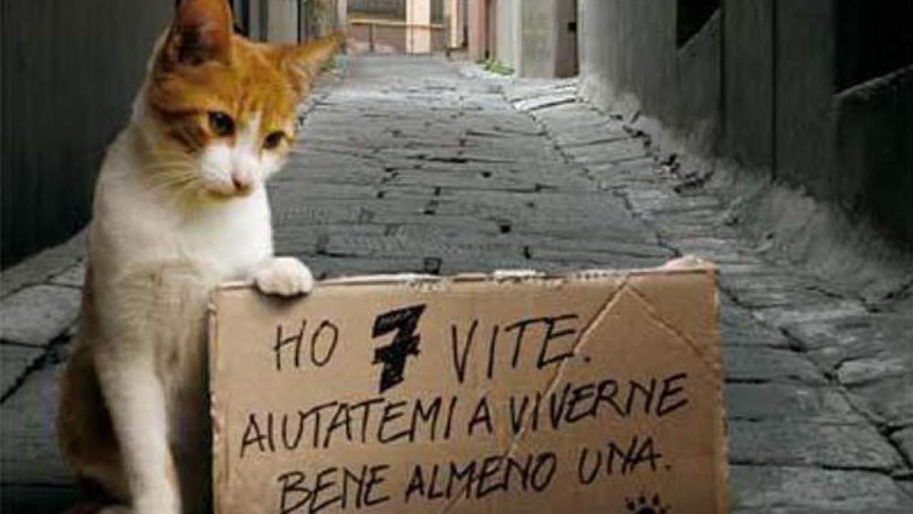 Strage di gatti ad Avezzano, scatta l'allarme bocconi avvelenati