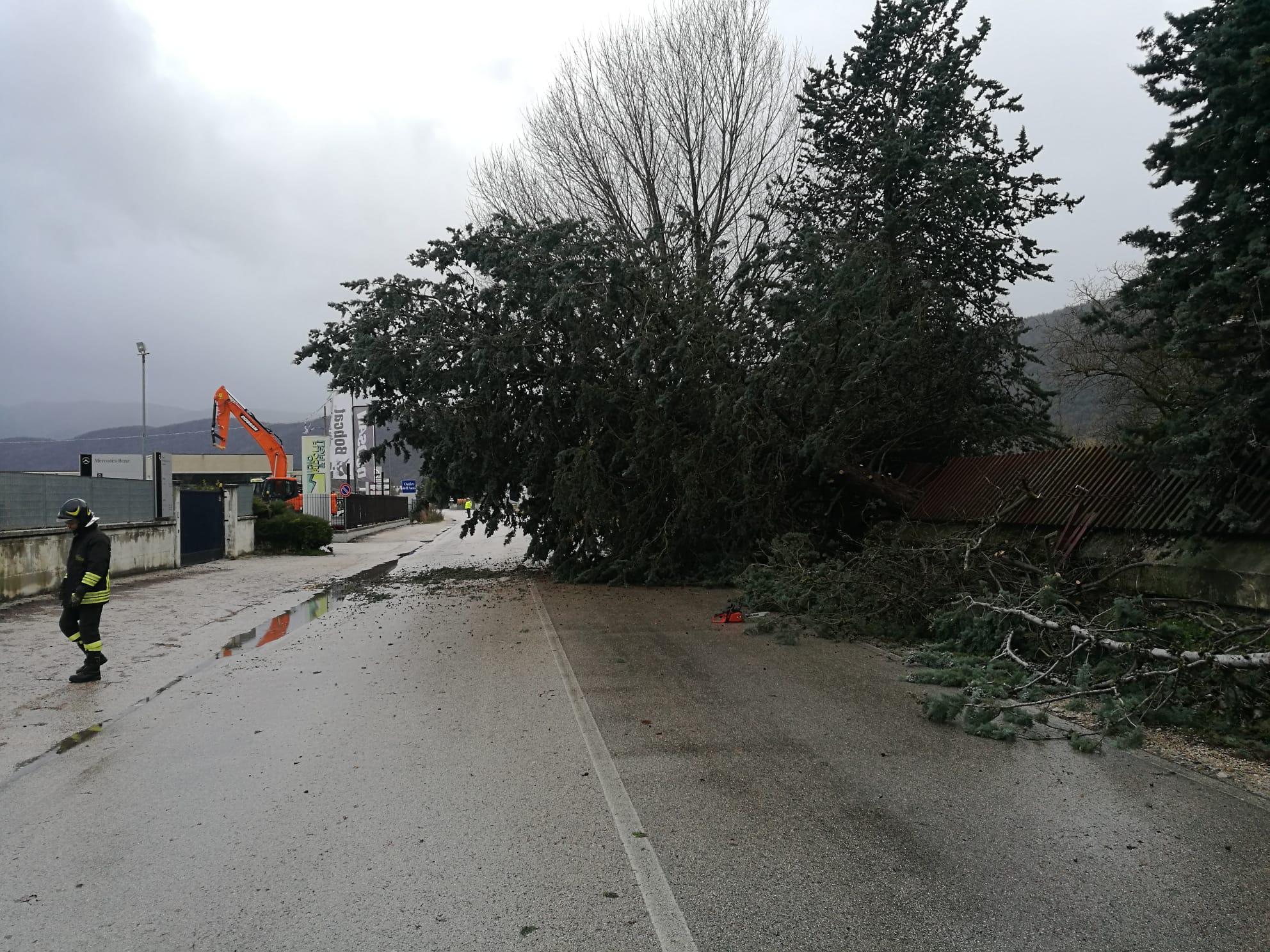 Maltempo Marsica, attivato il COC a Tagliacozzo, abbattuto un albero ad Avezzano