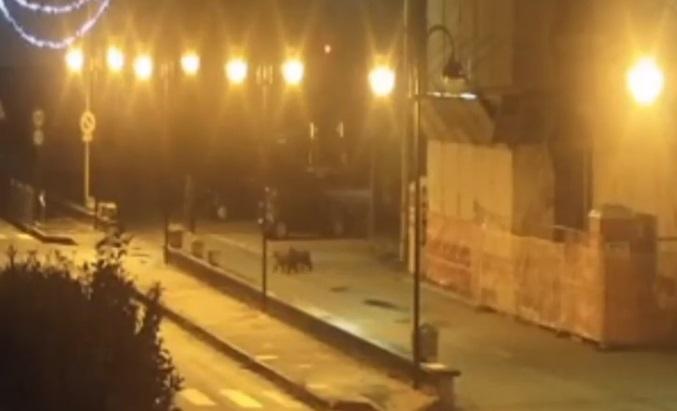 Cuccioli di orso a passeggio di notte a Civita D'Antino (VIDEO)