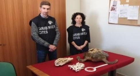 Carabinieri Forestali controllano la filiera dei prodotti ittici: sanzioni e sequestri di alimenti con provenienza non certificata