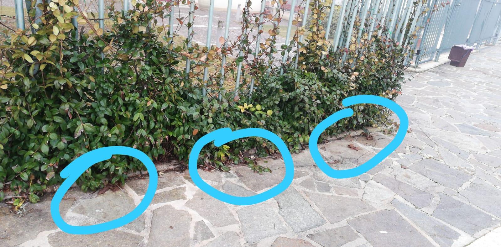 Troppi escrementi di cane nei pressi della nuova scuola di Magliano De' Marsi, le lamentele dei genitori