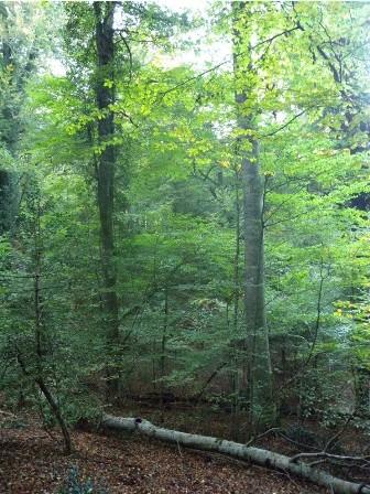 Le Faggete Vetuste UNESCO: una bandiera per la conservazione della natura in Europa