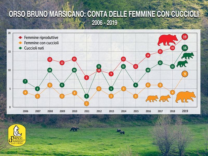 2019 anno da record per l'orso marsicano, 9 le femmine che si sono riprodotte, 16 i cuccioli contati
