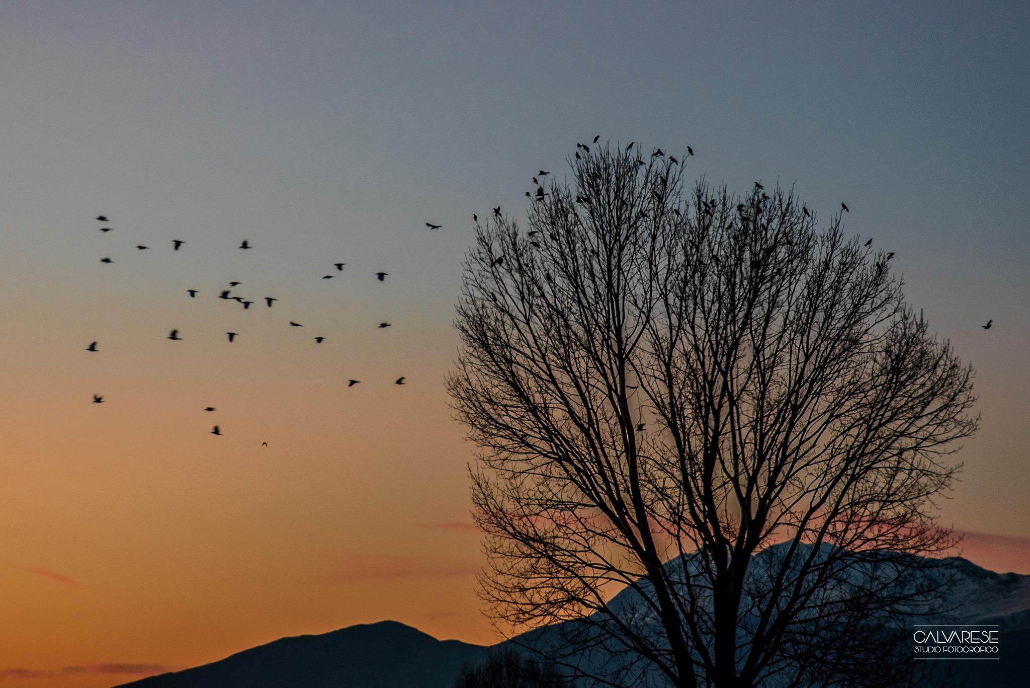 Tramonto sul Fucino: gli scatti del fotografo Gianluca Calvarese regalano scenari bellissimi della nostra terra